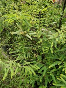 Fruits and Medicinal Plants  | Research and Development Centre